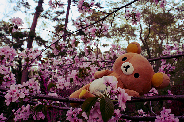 Rilakkuma Lifestyle - Cherry Blossoms 1