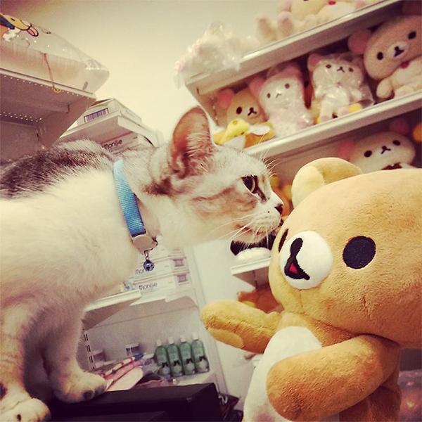 Rilakkuma @ Cat Cafe 2014 - Jemolian's Store