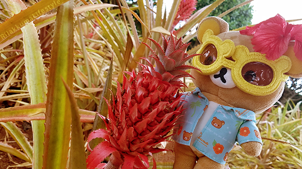 Rilakkuma Lifestyle in Hawaii - Dole Pineapple Plantation Experience