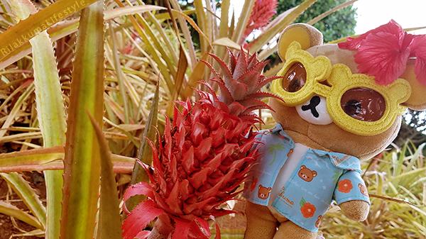 Rilakkuma Lifestyle in Hawaii - Dole Pineapple Plantation Experience