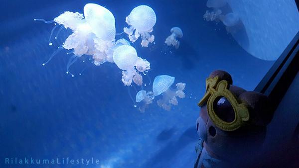 Rilakkuma Lifestyle in Hawaii - Waikiki Aquarium