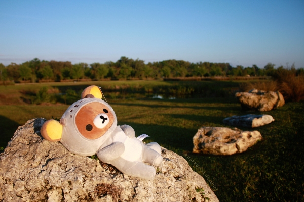 Rilakkuma Lifestyle - Rilakkuma plush - Sea otter series - stuffed animal - cute - kawaii - だららっこ - リラックマ あつめてぬいぐるみ - full landscape
